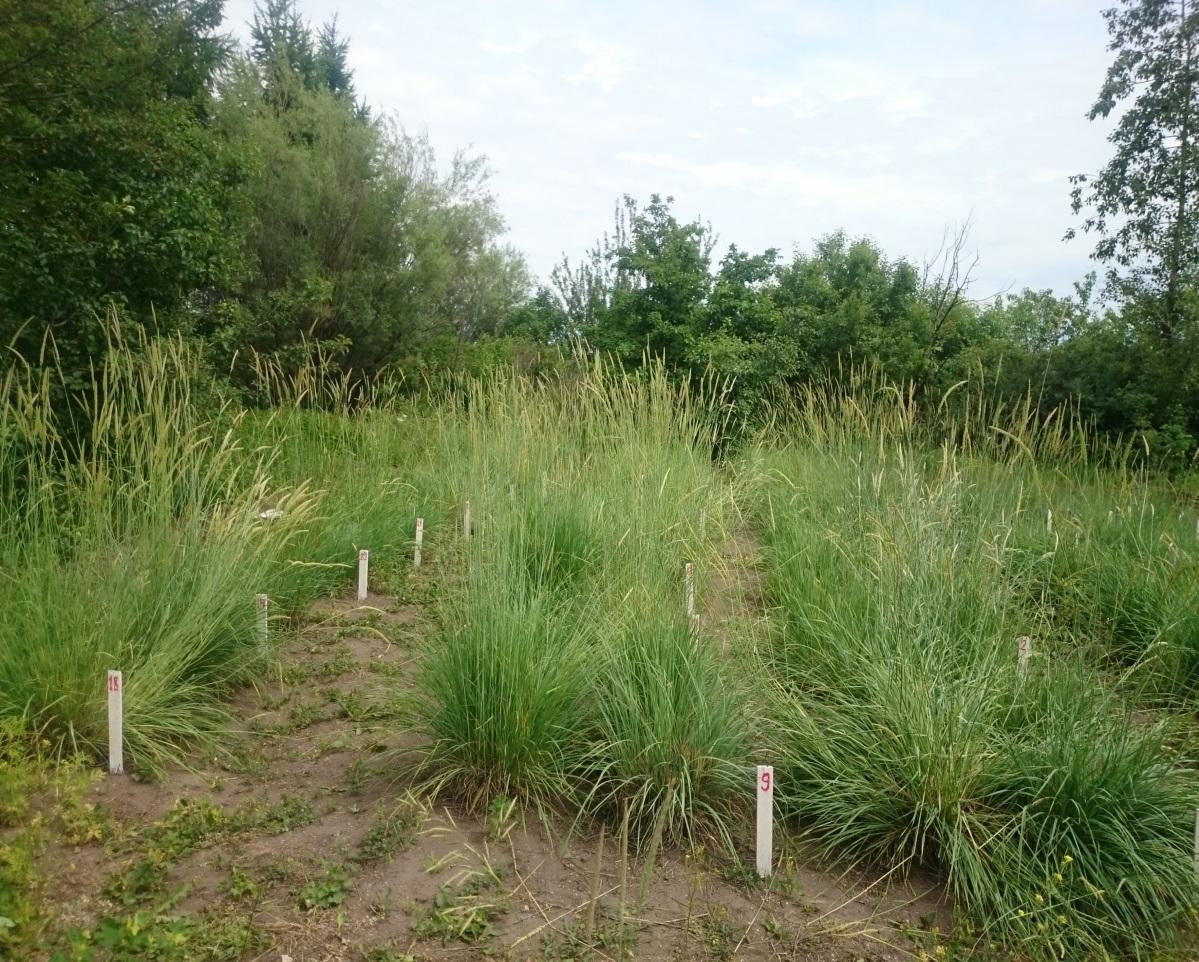 Изображение выглядит как внешний, трава, растение, поле Автоматически созданное описание